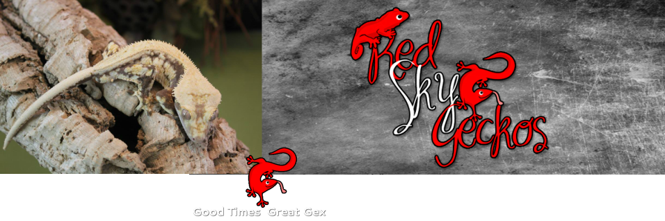 Red Sky Geckos